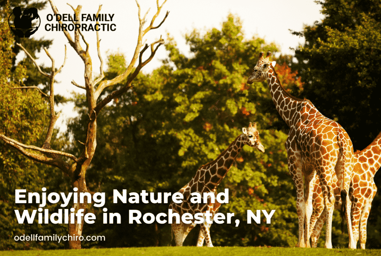 Enjoying Nature and Wildlife in Rochester, NY